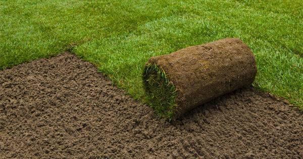 Описание и разновидности газонов для футбольного поля