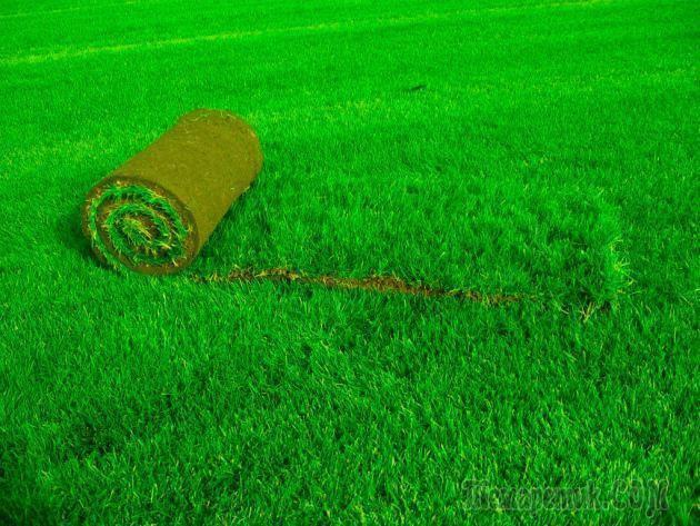 Искусственный газон: производство, область применения, преимущества и недостатки, виды и особенности укладки