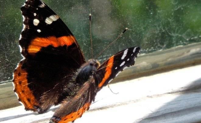 Мечтательность и перерождение: современное значение тату бабочка для девушек и парней